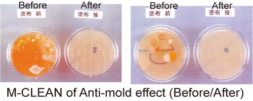 anti-bacterial-test2